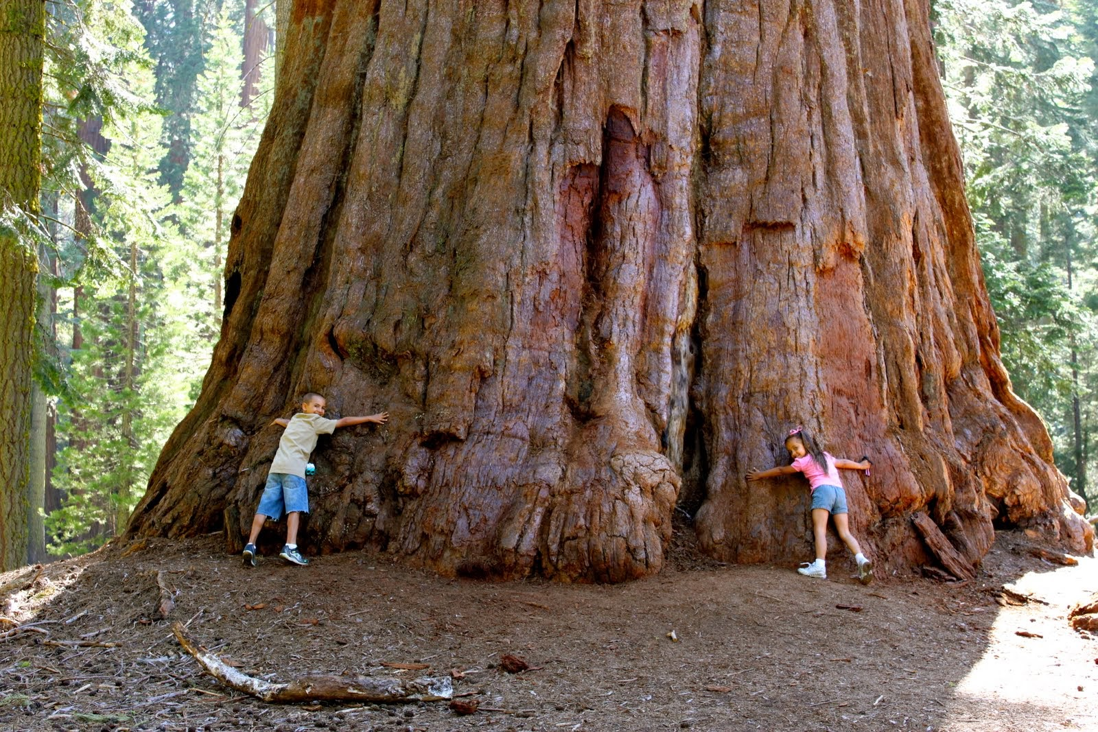 sequoia-national-forest-wallpapers